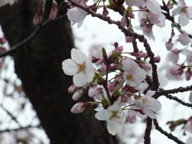 Megijima - Spring 2013 - 18