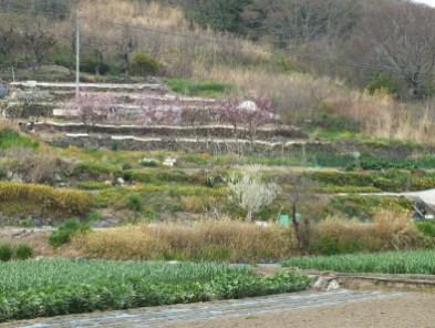 Megijima - Spring 2013 - 19