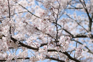 Ogijima - April 9-23 2019 - 14