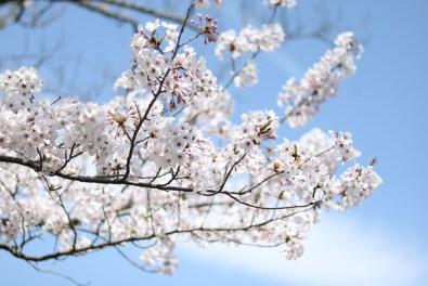 Ogijima - April 9-23 2019 - 17