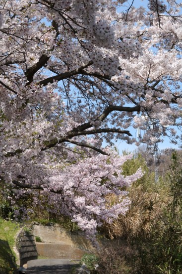 Ogijima - April 9-23 2019 - 19