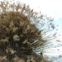 Setouchi Triennale 2019 - Part One - Shodoshima
