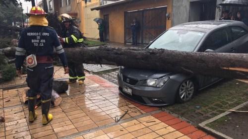 Tormenta en Toluca derribó árboles y causó inundaciones