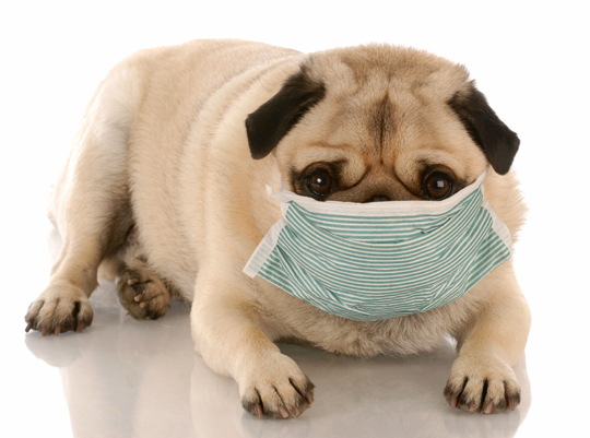 Doctors say there's no such thing as an allergy-free dog. The ...