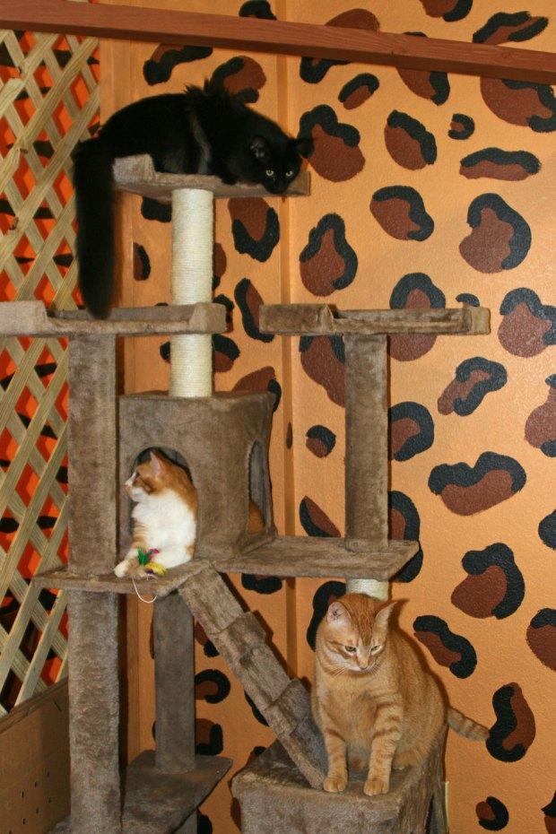 Kat Kingdom cats enjoy the cat tree.