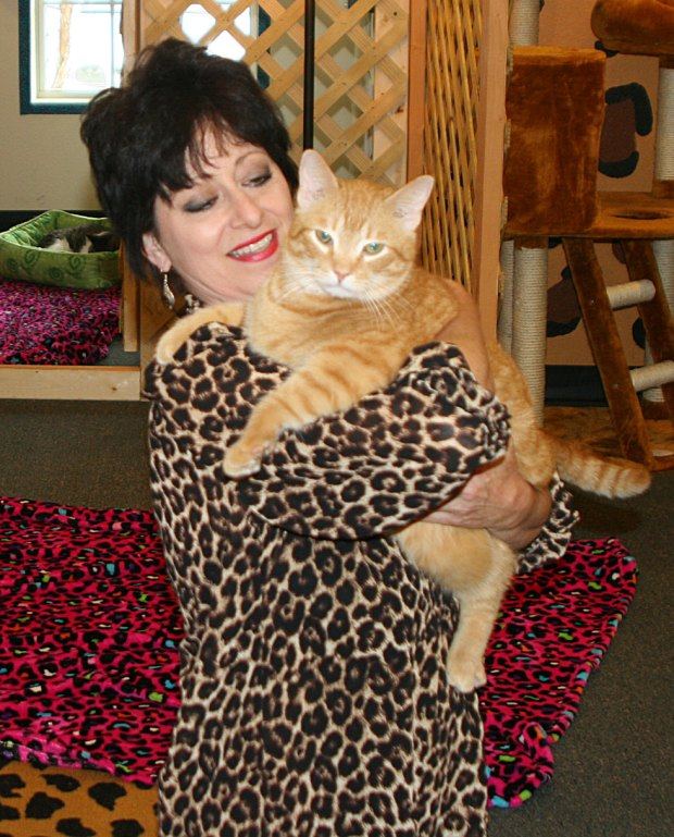 Sandy Sgrillo, owner of Kat Kingdom, with one of her favorite cats.