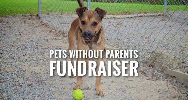 All Paws Concert & Silent Auction for Pets Without Parents Shelter