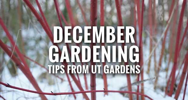 December Gardening Tips from the UT Gardens