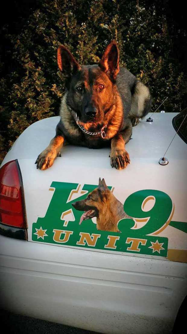 sevier-county-sheriff-k9-2