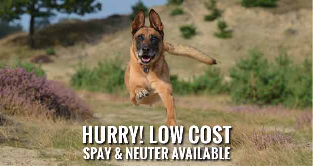 Sevier County Humane Society offers Low Cost Spay and Neuter Program