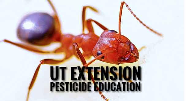 Pesticide Certification Training Available Through UT Extension