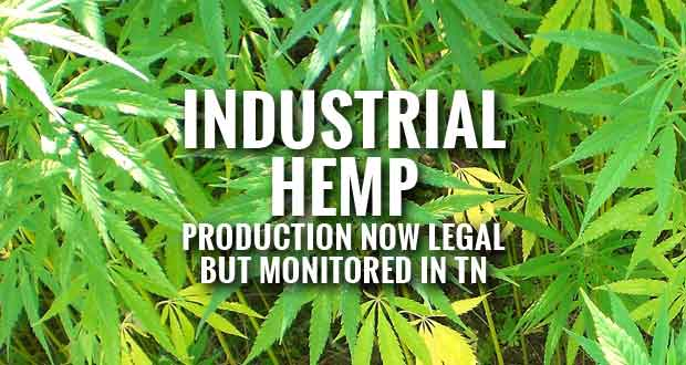 Industrial Hemp Production Comes to Tennessee