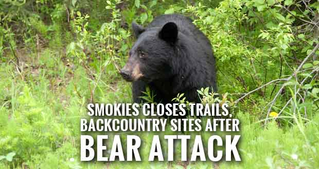 Park Closes Trails and Backcountry Sites after Bear Pulls Boy from Hammock