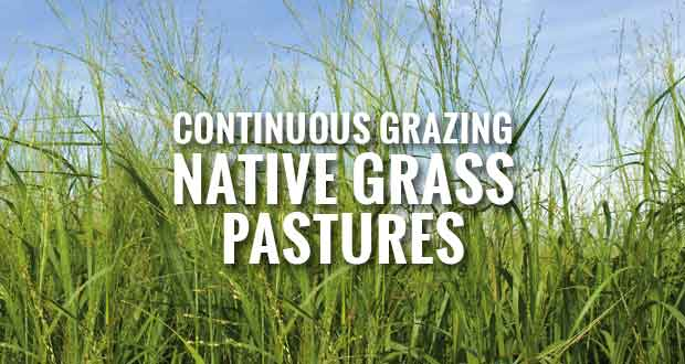Continuous Grazing Native Grass Pastures