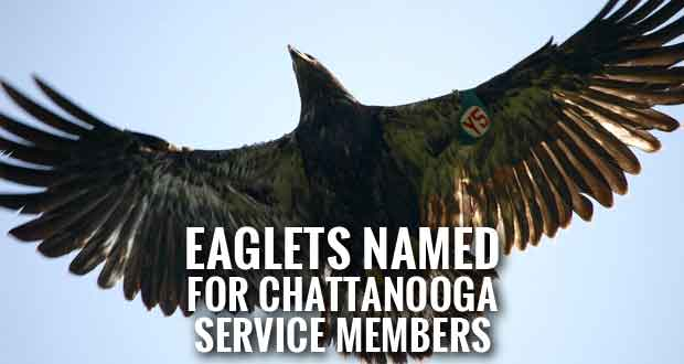 Two Bald Eaglets Released in Honor of Chattanooga Shooting Victims