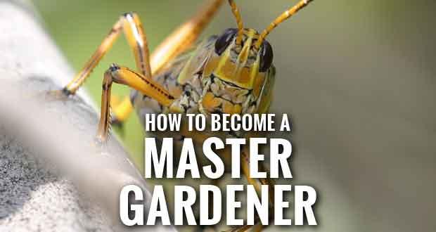 Master Gardener Program Offered in Sevier County