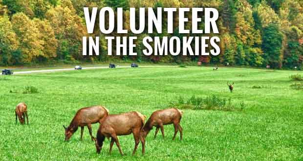Smokies Seeks Oconaluftee Roving Volunteers