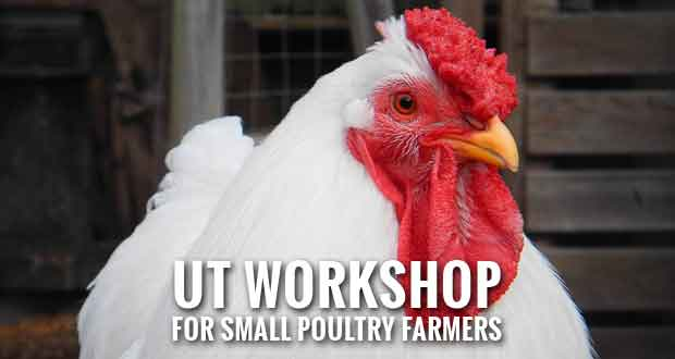 Poultry Processing Workshop to Help Small-Scale Poultry Farmers