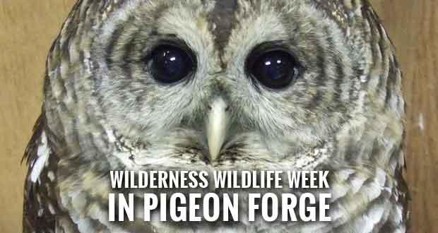 More Than 250 Free Programs at 2016 Wilderness Wildlife Week