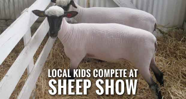 Sevier 4-H Kids Do Well at Eastern Region Sheep Expo