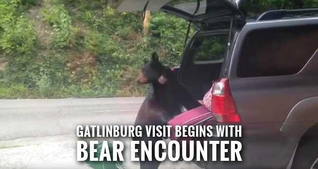 Black Bear Burgles Vehicle at Gatlinburg Rental Cabin