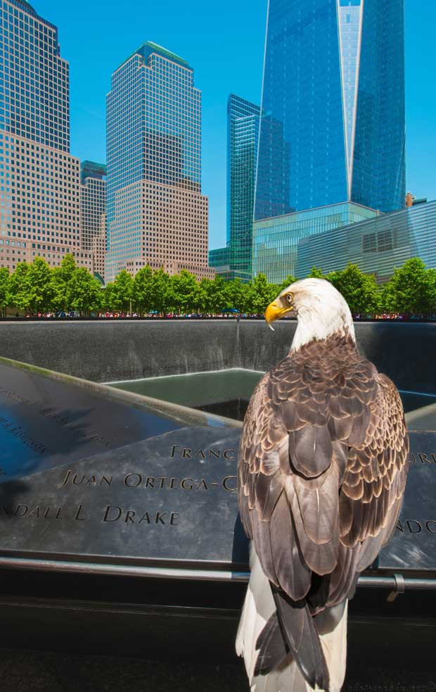 Famous Bald Eagle Challenger at 9/11 Memorial