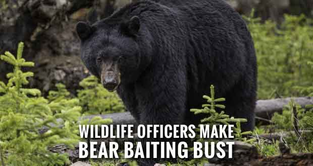 Twenty Hunters Charged with Illegally Baiting Black Bears