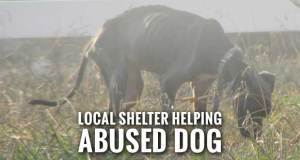 Sevier County Man Facing Animal Cruelty Charge for Emaciated Dog