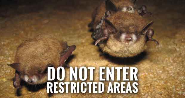 Smokies Limits Access in Whiteoak Sink Area to Protect Bats, Hikers