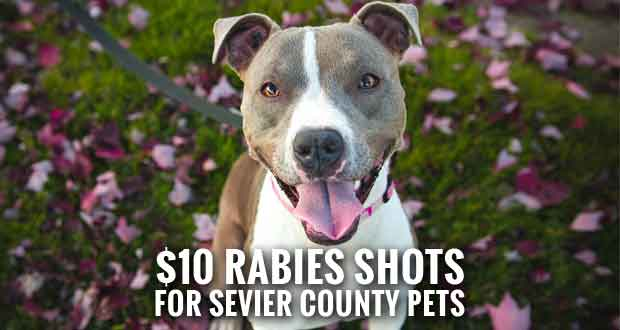 Sevier County Health Department Schedules Rabies Clinics