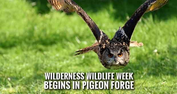 Wilderness Wildlife Week Offers 250 Free Seminars, Concerts, Excursions