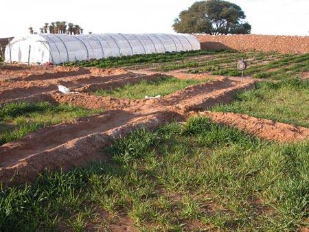 Este proyecto parte de la base de la disposición del propio campamento de Dajla, el cual se encuentra cercano de abundantes recursos hídricos a escala profundidad