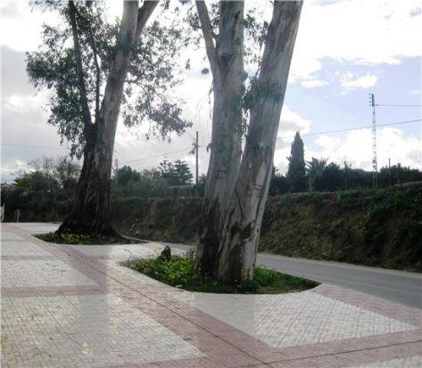 El nuevo tramo se ha dotado con variada vegetación para embellecer la entrada/AyuntOlivares.