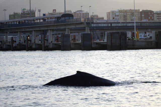 Imagen de la ballena jorobada en la Bahía de Algeciras/SINC