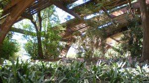 La federación de izquierdas promoverá la declaración del Jardín Americano como Bien de Interés Cultural