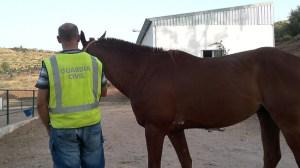 caballo-robado-cantillana-guardia-civil-010711