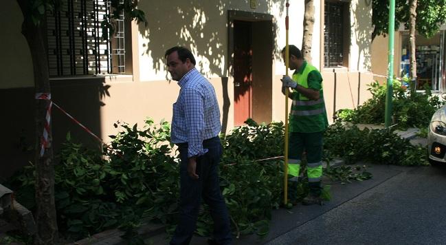 En los talleres se impartirán lecciones de, por ejemplo, poda y cirugía arbórea. / Sevilla Actualidad