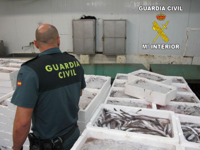 pescado-inmaduro-guardia-civil