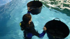 primero inquilinos acuario