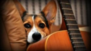 Los-perros-distinguen-los-diferentes-componentes-del-habla-humana image 380