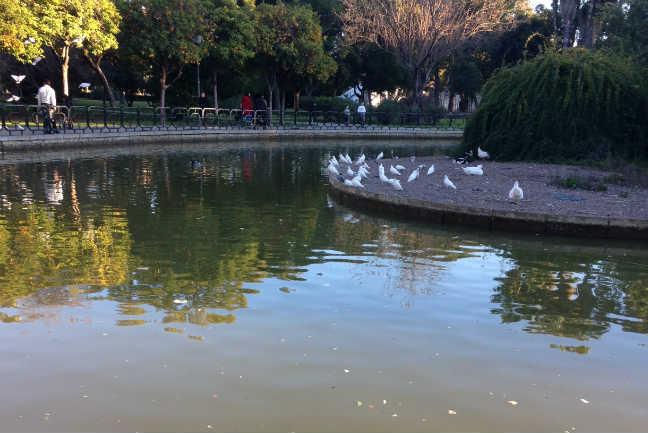 estanque 3