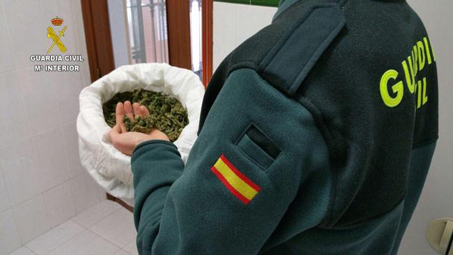 cogollos-marihuana-pilas
