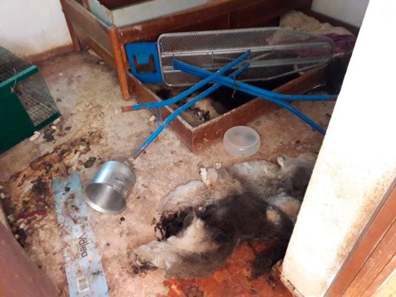 Alguno de los cadáveres de los perros en el interior del chalet /Cedida