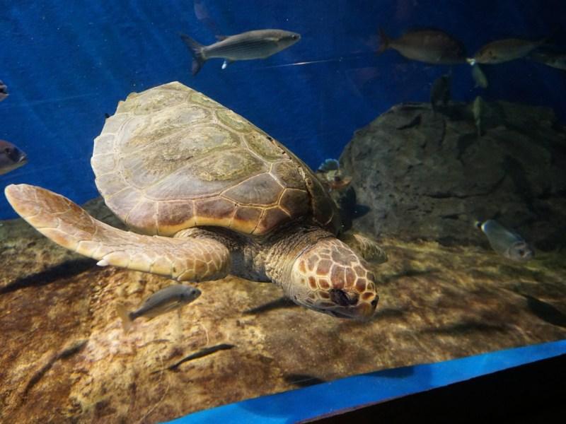 La tortuga /Acuario de Sevilla