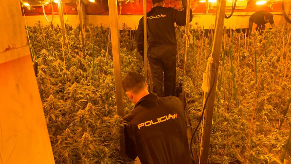 plantación marihuana alcalá