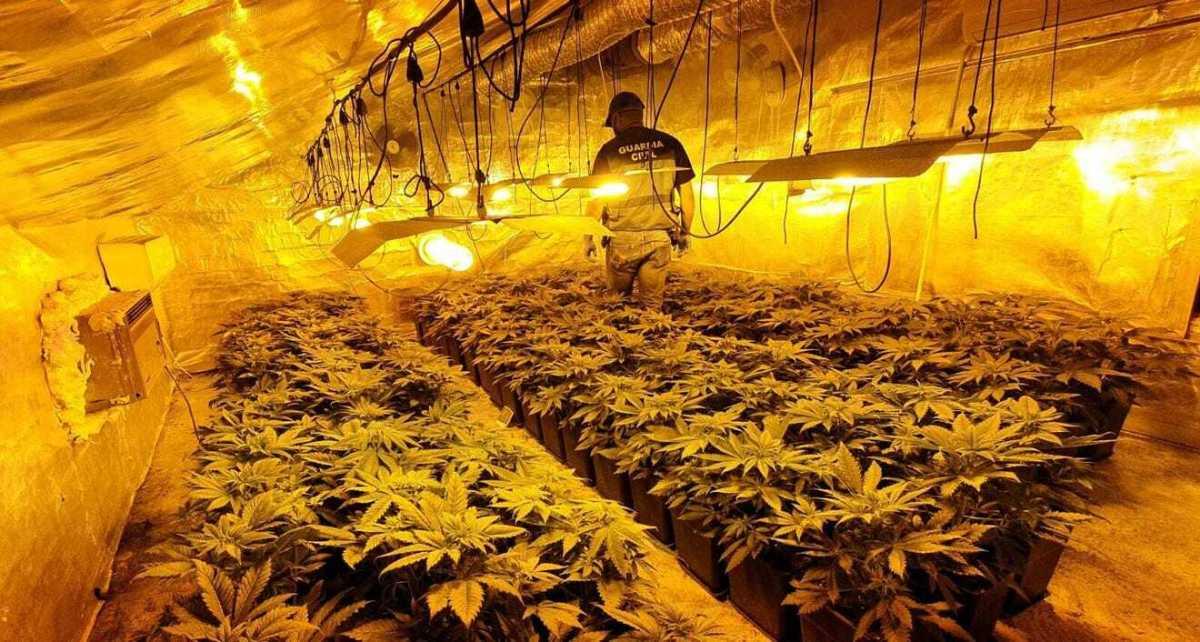 Marihuana en la vivienda ocupada en Los Palacios / SA