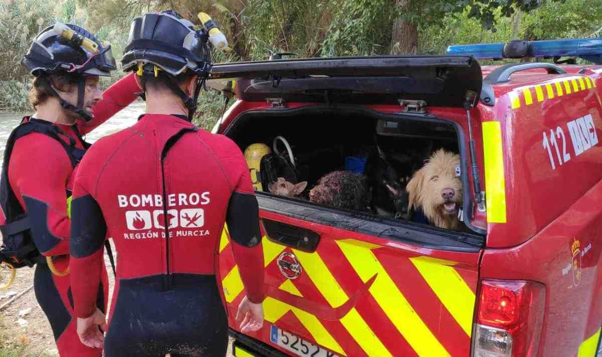 Los bomberos lograron rescatar al perro y a su dueña / Bomberos