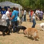 El Parque del Alamillo acoge el I Encuentro de Adopción Solidaria de Mascotas