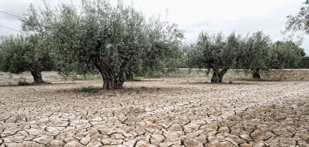 La Confederación Hidrográfica del Guadalquivir pide al gobierno que declare la situación de sequía.
