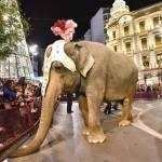 El PACMA quiere evitar animales en las cabalgatas de Reyes